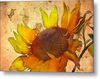 Helianthus Metal Print by John Edwards