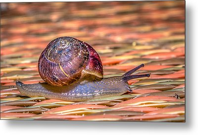 Metal Print featuring the photograph Helix Aspersa by Rob Sellers