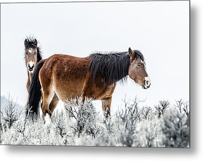 Hello Metal Print by Yeates Photography