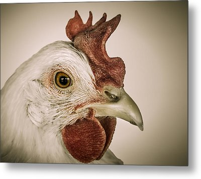 Hen Pecked Metal Print