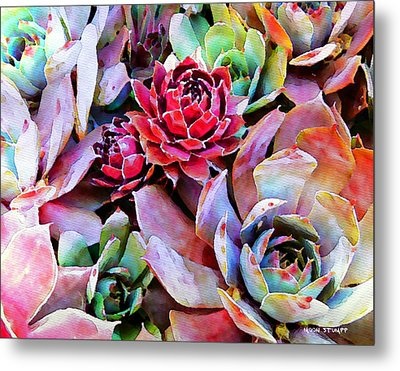 Hens And Chicks Series - Copper Tarnish  Metal Print