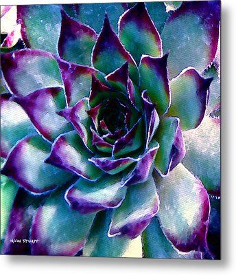 Hens And Chicks Series - Evening Hues Metal Print by Moon Stumpp