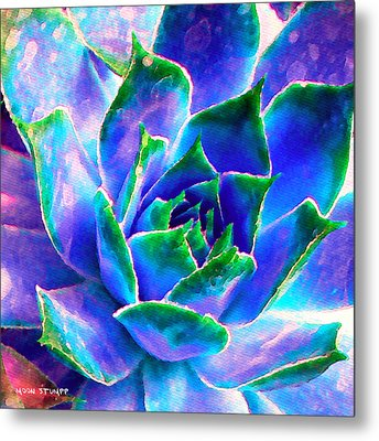 Hens And Chicks Series - Touches Of Blue  Metal Print by Moon Stumpp
