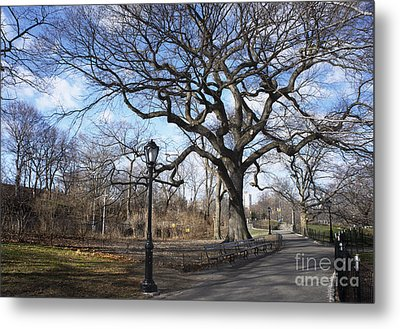 Her Majesty The Tree Metal Print
