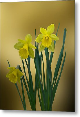 Metal Print featuring the photograph Here Comes Spring... by Judy  Johnson