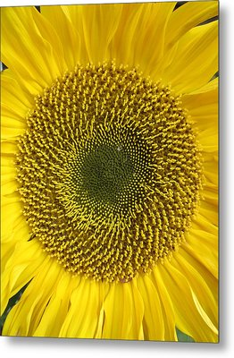 Here Comes The Sun.... Metal Print