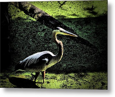 Metal Print featuring the photograph Here Fishy Fishy by Robert McCubbin