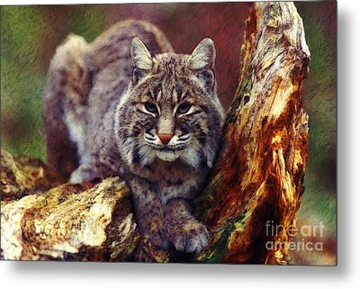 Metal Print featuring the digital art Here Kitty Kitty by Lianne Schneider