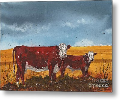 Hereford Cow And Calf Metal Print by Tim Oliver