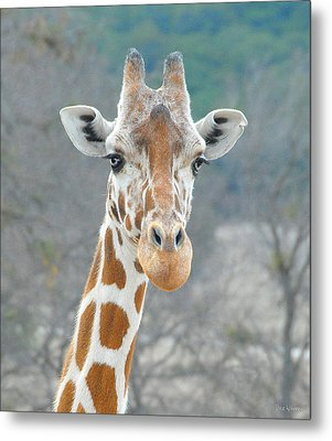 Metal Print featuring the photograph Here's Lookin' At You by Dyle   Warren