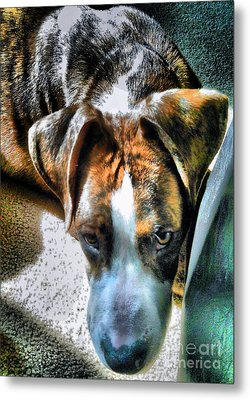 Metal Print featuring the photograph Here's Lookin Atchya by Robert McCubbin