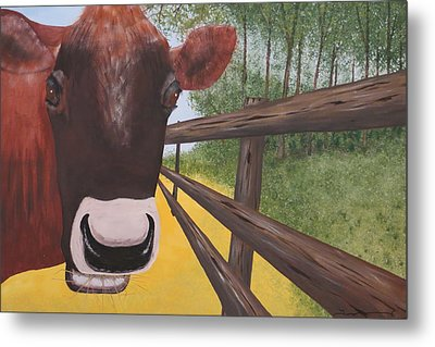 Here's Looking At Moo Metal Print by Tim Townsend