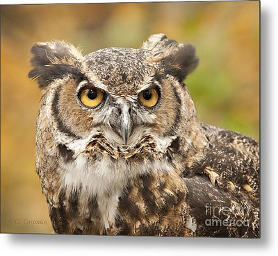 Metal Print featuring the photograph Here's Looking At You by Carol Lynn Coronios