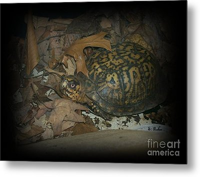 Metal Print featuring the photograph Here's Looking At You by Sara  Raber