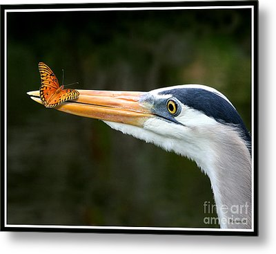 Heron And Butterfly Metal Print by Mariarosa Rockefeller