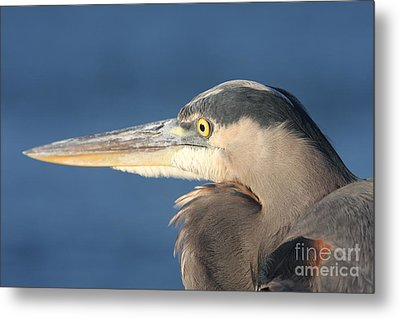Heron Close-up Metal Print by Christiane Schulze Art And Photography