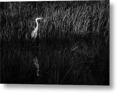 Metal Print featuring the photograph Heron by David Isaacson