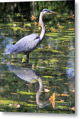 Metal Print featuring the photograph Heron Hunter by Kenny Glotfelty