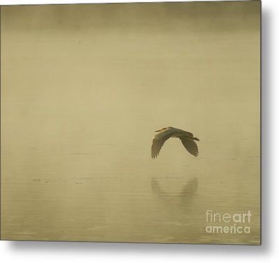 Metal Print featuring the photograph Heron In Flight  by Christopher Mace