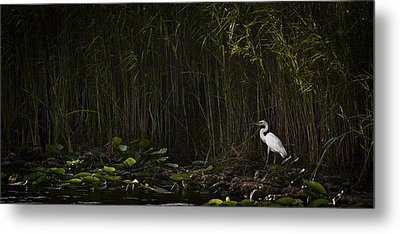 Heron In Grass Metal Print by Bradley R Youngberg