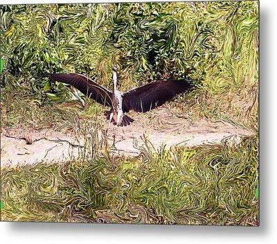 Heron Landing Metal Print by Carolyn Reinhart