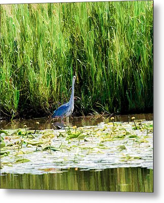 Metal Print featuring the photograph Heron by Leif Sohlman