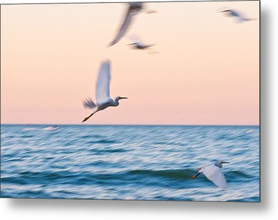 Herons Flying Over The Sea  Metal Print