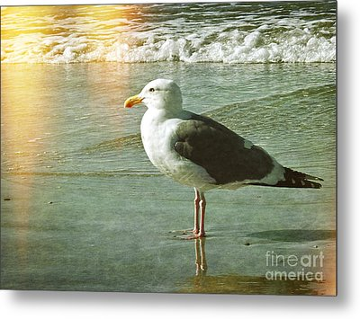 Herring Gull Watching Metal Print