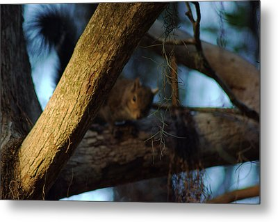 Metal Print featuring the photograph He's Watching You by Daniel Woodrum