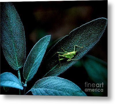 Metal Print featuring the photograph Hey  I'm Trying To Hide by Debra Fedchin