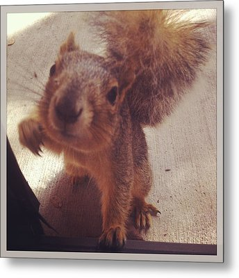 Hey Squirrel  Metal Print