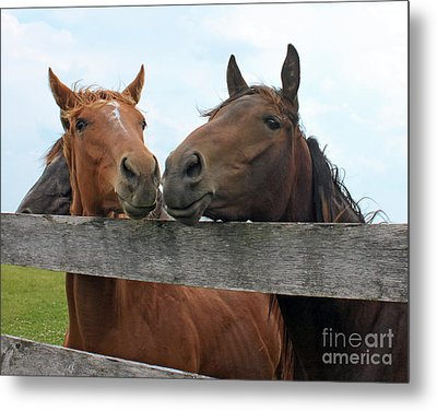 Hey You Come Here Metal Print by Debbie Hart