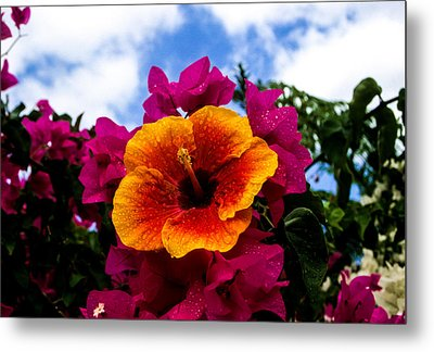 Metal Print featuring the photograph Hibiscus Beauty by Randy Sylvia