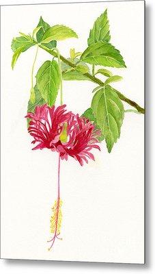 Hibiscus Chinese Red Lantern Metal Print by Sharon Freeman