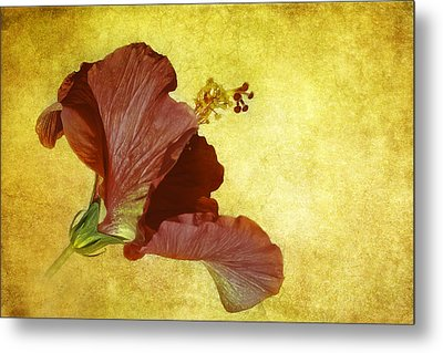 Hibiscus Metal Print by Cyndy Doty