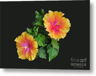 Metal Print featuring the photograph Hibiscus Duo by Susan Wiedmann