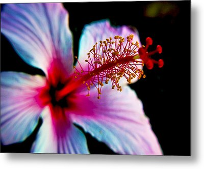 Metal Print featuring the photograph Hibiscus Extending by Joseph Hollingsworth