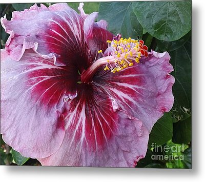 Metal Print featuring the photograph Hibiscus In Hawaii by Laura  Wong-Rose