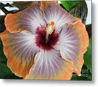 Hibiscus  Metal Print by Jennifer Wheatley Wolf