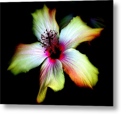 Metal Print featuring the photograph Hibiscus by Jodie Marie Anne Richardson Traugott          aka jm-ART