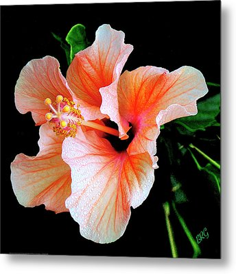 Hibiscus Spectacular Metal Print by Ben and Raisa Gertsberg