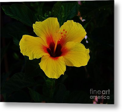 Hibiscus Stand Out  Metal Print by Craig Wood