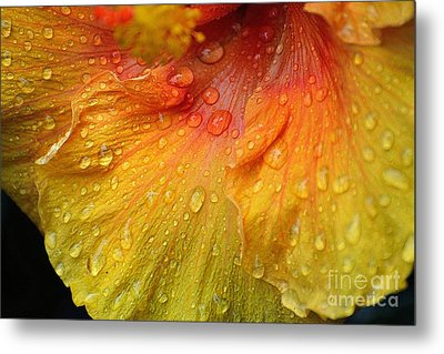 Metal Print featuring the photograph Hibiscus Water Drops by Lisa L Silva