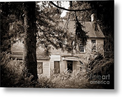 Hidden Behind The Pines Metal Print by Colleen Kammerer