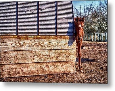 Hidden Horse Metal Print by Ian Van Schepen