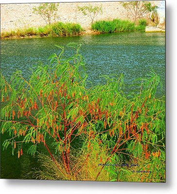 Metal Print featuring the photograph Hidden Oasis by David  Norman