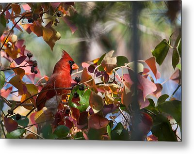 Hiding Away Metal Print by Linda Unger