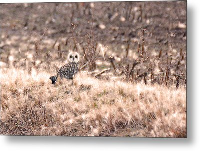 Hiding In Plain Sight Metal Print