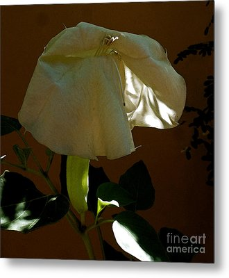 Hiding In Plain View  Metal Print by L T Sparrow