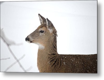 Metal Print featuring the photograph High Alert by Dacia Doroff